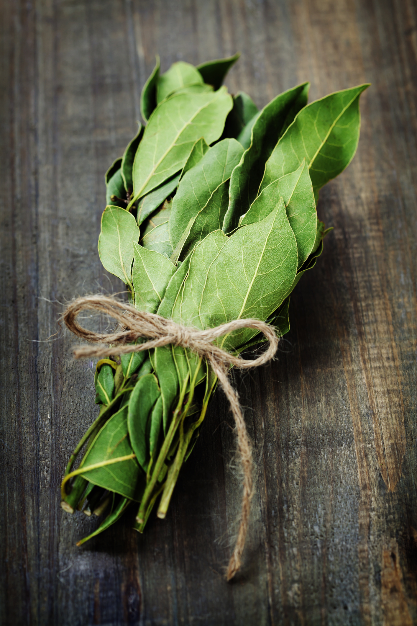 how to kill rats with bay leaves