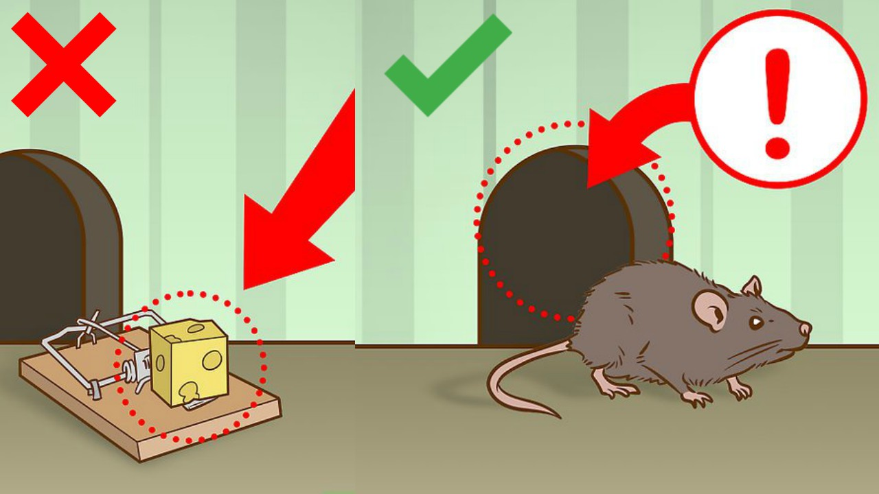 how to kill rats with rat killer trap