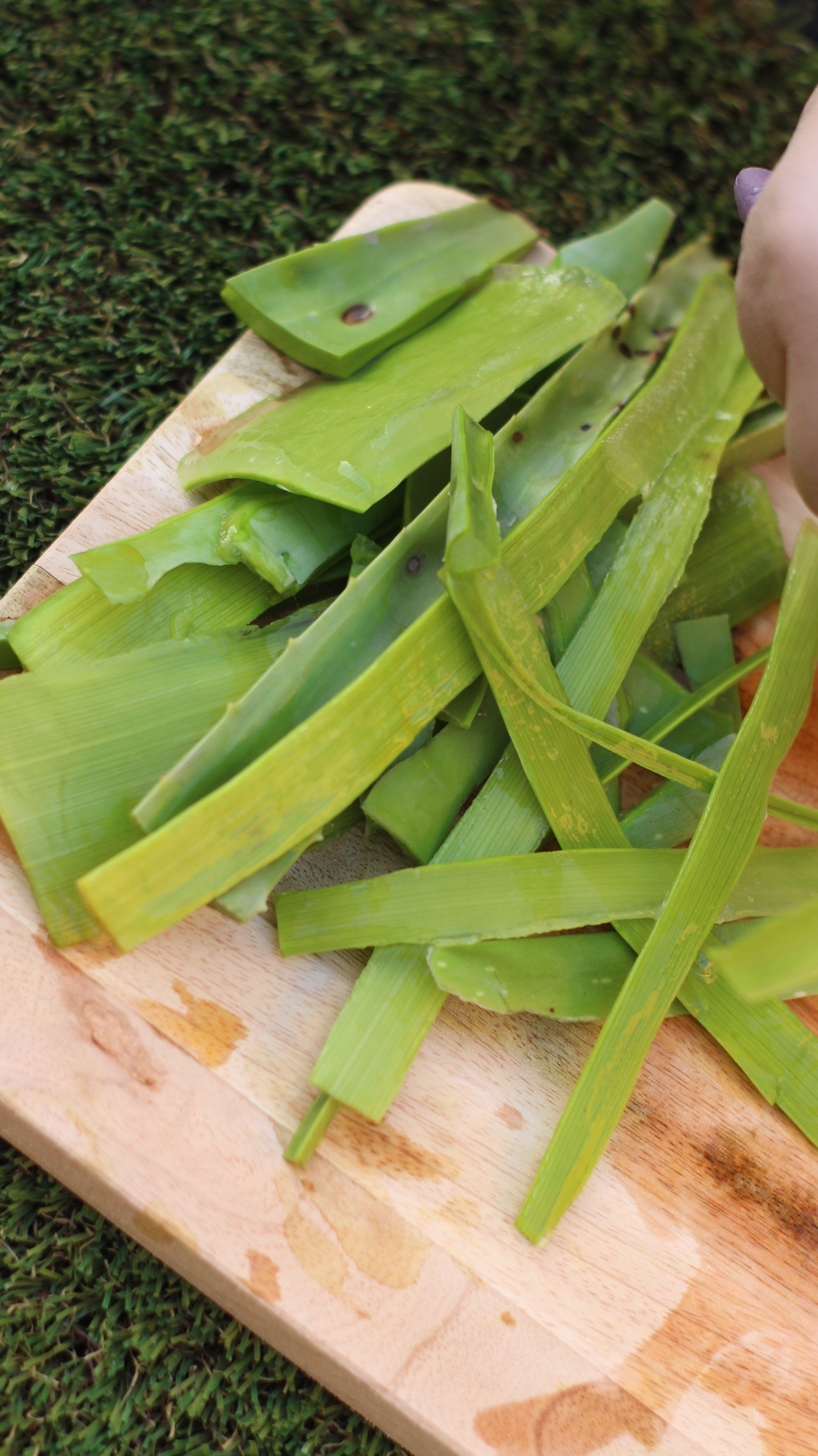 aloe vera uses
