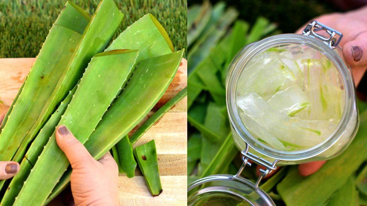 how to make aloe vera gel and benefits of aloevera gel
