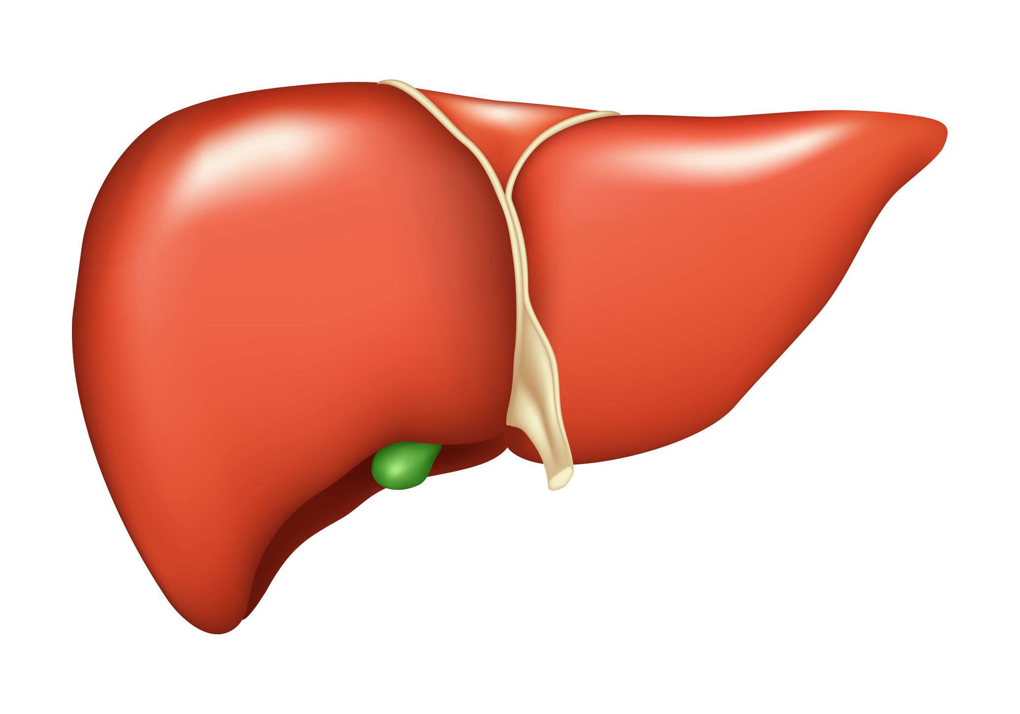 how to cleanse liver